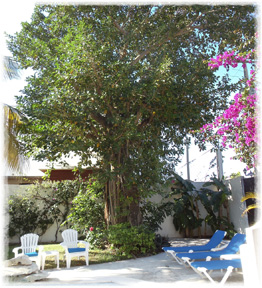 Cozumel rental villa tropical tree